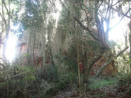Parque Estadual de Vila Velha: Bosque