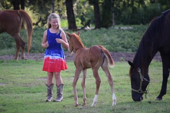 Southern Cross Ranch: Mother/foal pasture