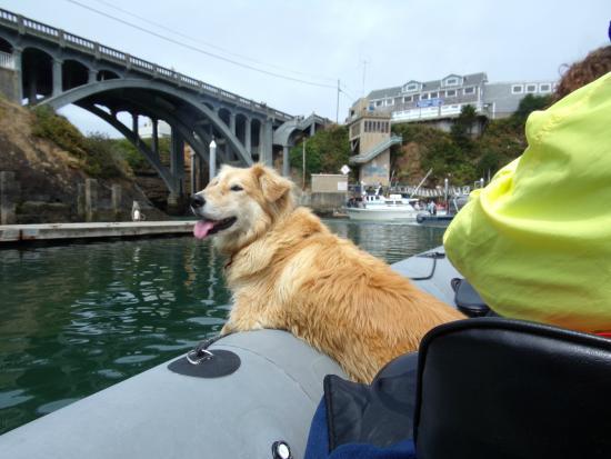Depoe Bay, OR: Whale Spotting Dog