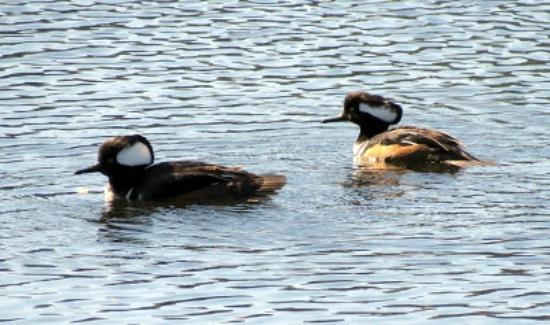 Nanaimo, كندا: A bird-watcher paradise!