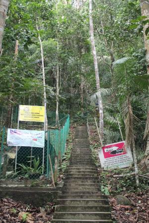 Soga Perdana Amenity Forest: Stairs