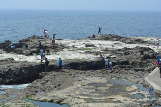 Chigogafuchi Marine Plateau : 磯