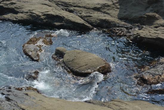 Chigogafuchi Marine Plateau : 亀石