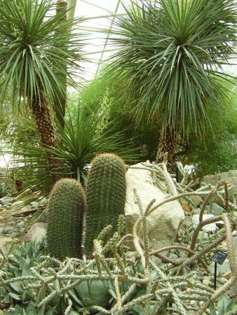 Foellinger Freimann Botanical Conservatory: Desert Garden .