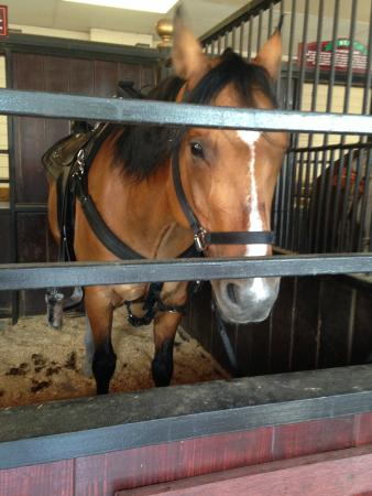 Branson, MO: Viewing area of show horses