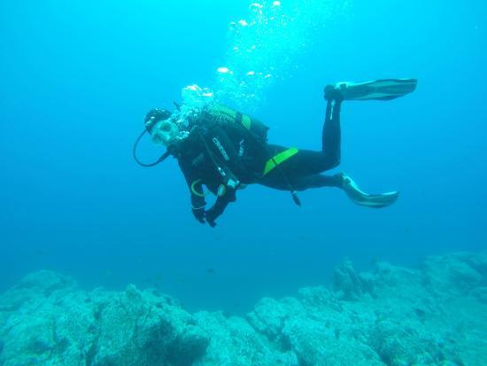 Madeira Diving Center: Hallo! Da sind wir wieder .. im Nassen Element!