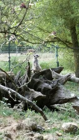 Reserve de la haute touche photo de reserve zoologique for Haute touche