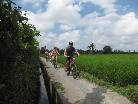 Cycling Tour Bali Tripadvisor