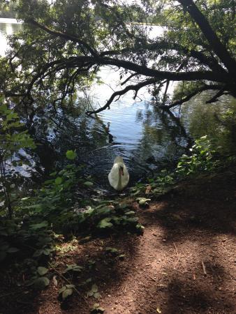 Westport Lake: photo1.jpg