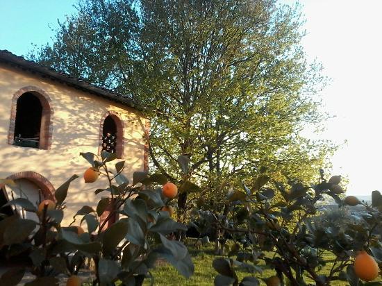 Farmhouse Residence Casa Italia : Antiche case
