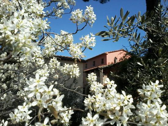 Farmhouse Residence Casa Italia : Fiori