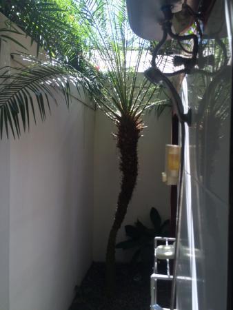Bonsai Villas: photo2.jpg