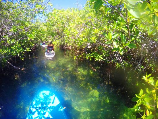 360 Surf School: SUP through Mangrove tunnels and pathways!!!