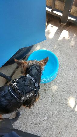 Leesburg, VA: They have outside seating and brought my dog water!! Love this place!!!