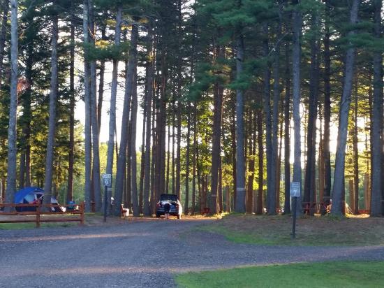 Old Orchard Beach Campground: Dark Forest area