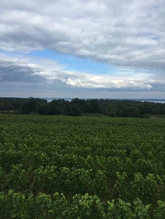 Traverse City Wine And Beer Tours: photo3.jpg
