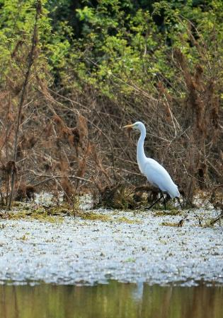 Prek Toal Bird Sanctuary: Common sighting of this stork