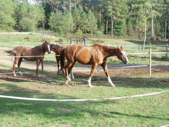 St.-Julien-de-Crempse, Frankrig: Les chevaux