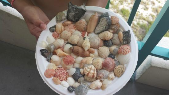 Beautiful Pensacola Beach Seashells