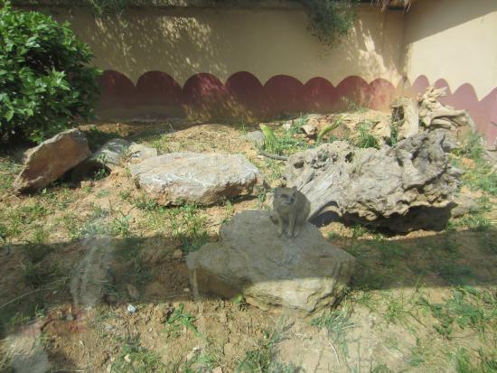 Bosphorus Zoo: zoo