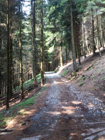 Agriturismo Alpe di Sala: photo2.jpg
