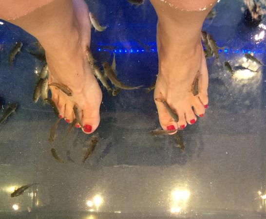 Athens doctor fish foot therapy day spa picture of for Fish foot spa