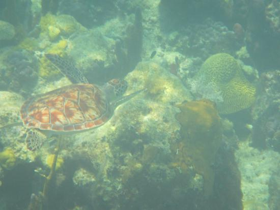 Turks Caicos Coral Gardens Picture of Bight Reef Providenciales