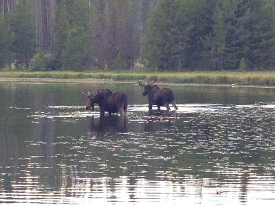 Anaconda, MT: Two Bulls at Rainbow Fishing access