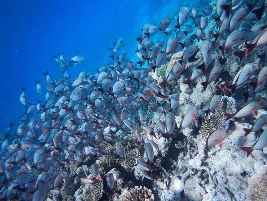 Dhiggiri: La barriera corallina