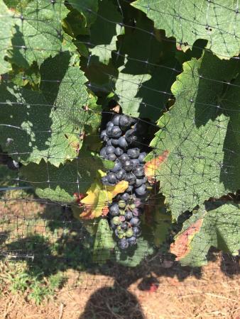 Brooks Hill Winery: photo1.jpg