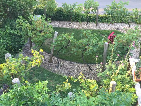 Aerie House & Beach Club: Garden