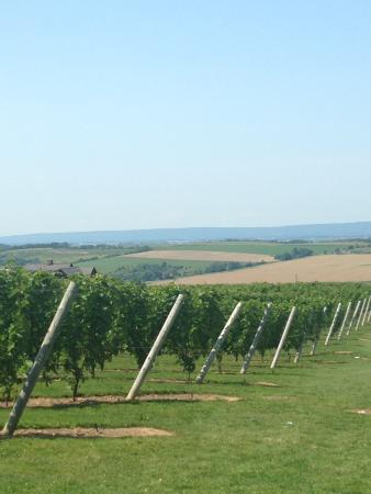 Wolfville Magic Winery Bus: The view from Luckett's!