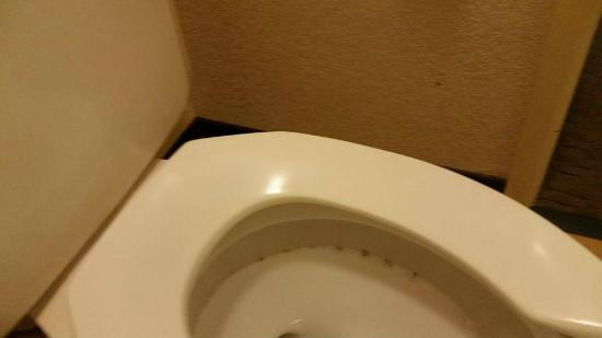 Red Roof Inn Danville: Moldy Stains In Toilet.