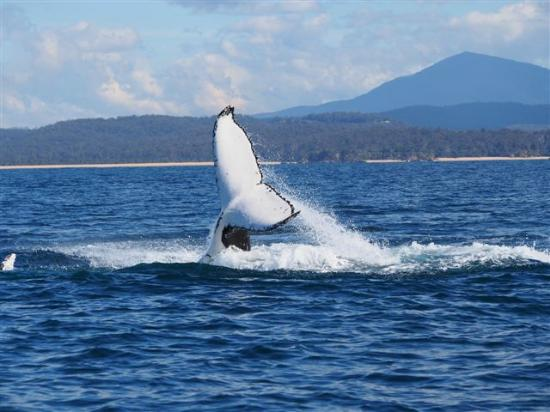 Snug Cove Bed and Breakfast: Whale in the Bay 15/08/15