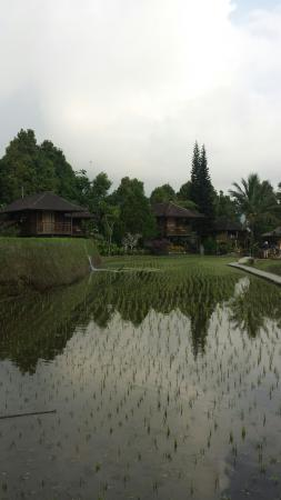 Puri Lumbung Cottages: View of cottages