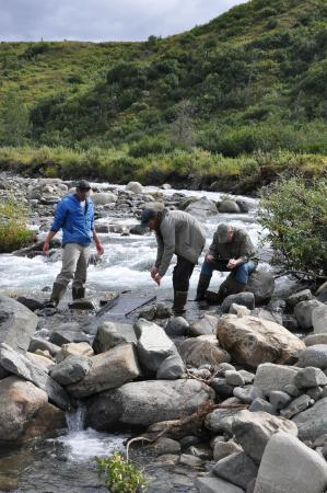 Alpine Creek Lodge: Gold panning