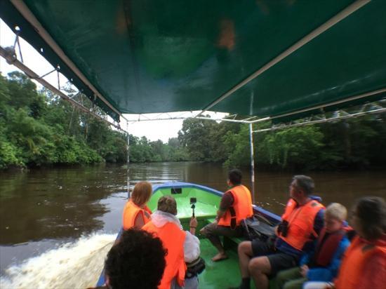 Proboscis Monkey River Cruise: River Cruise