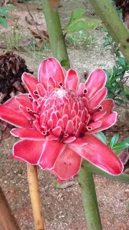 Villa Rafia Guesthouse : Un jardin sublime