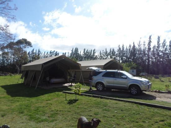 Addo African Home : The safari tents