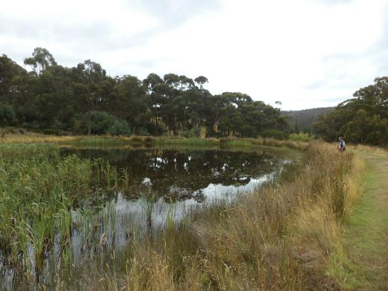 Hamlet Downs Country Accommodation : Platypus Creek on the estate, a 7 minute walk away