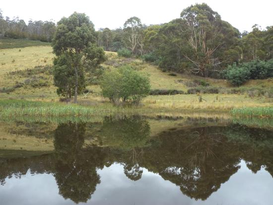 Hamlet Downs Country Accommodation : Platypus Creek