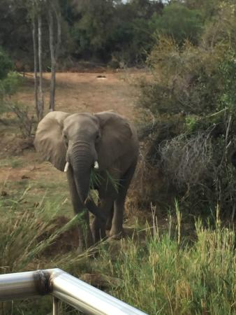 Olifants River Safaris Day Trips: Elephant
