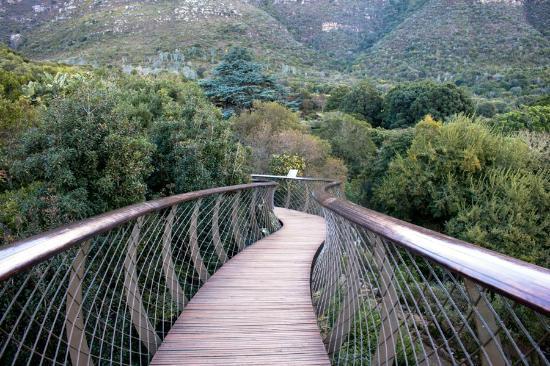 Kirstenbosch National Botanical Garden Canopy Walk & Castle Rock - Picture of Kirstenbosch National Botanical Garden ...