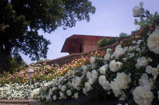Agritourism Il Colle delle Querce : Il nostro roseto a maggio!