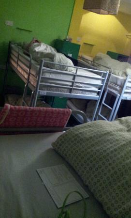 A Beary Good Hostel: ห้องนอน