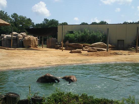Montgomery, AL: Elephants
