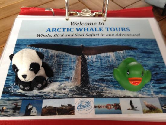 Arctic Whale Tours: Ducky and Panda on whale trip