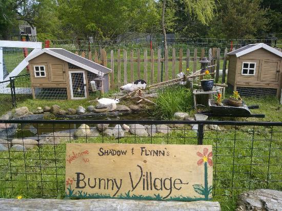 Grand Manan, Καναδάς: Bunnies!