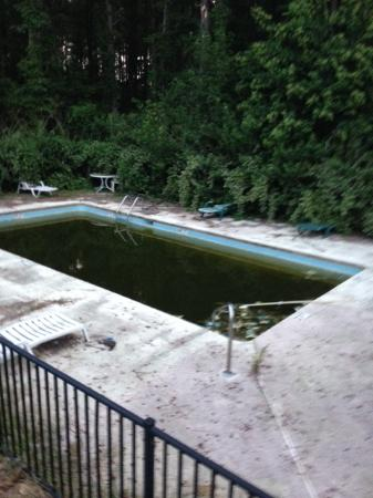 Turbeville, SC: yup ..... this is the pool ..... no joke.