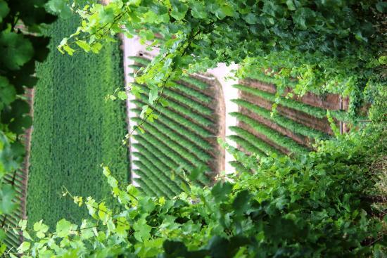 Hotel Temps d'Or: Vineyards surrounding Wormeldange, Luxembourg